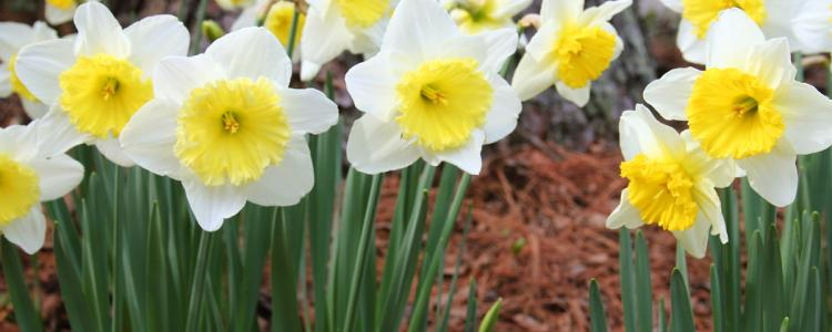 Spring has come early to orange county nc mightylinksfo