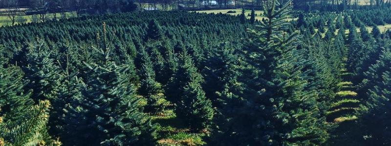 - Create Holiday Memories At Loudoun Christmas Tree Farms