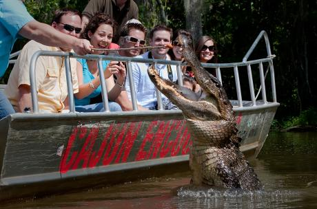 Guests on Cajun Encounters tour seeing alligator up close