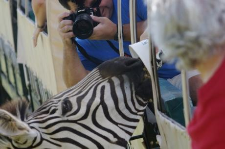 Photo ops at Global Wildlife Center
