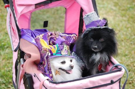Mardi Gras - Pups on parade