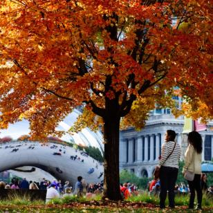 Fall colors in Chicago at Cloud Gate in Millennium Park