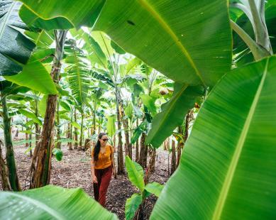 Woman walking trees at Flamingo Gardens in Fort Lauderdale