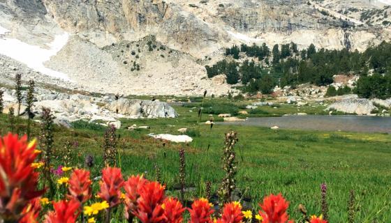 Twenty Lakes Basin Flowers