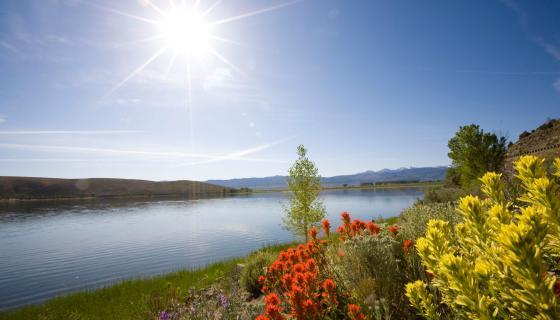 Topaz Lake Wildflowers