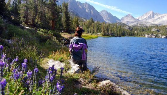 Wildflowers rock creek little lakes valley