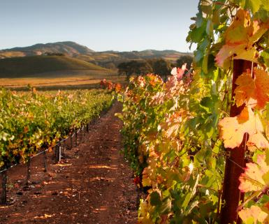 Fall in Sonoma Valley
