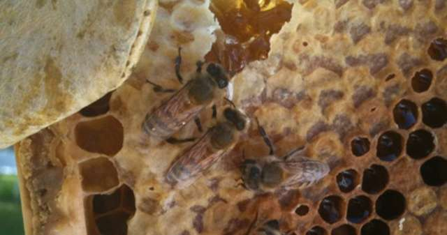Bees In The Beehive State