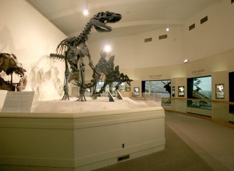 MSU Museum