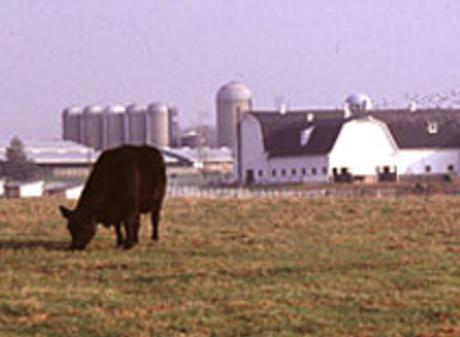 MSU Farms