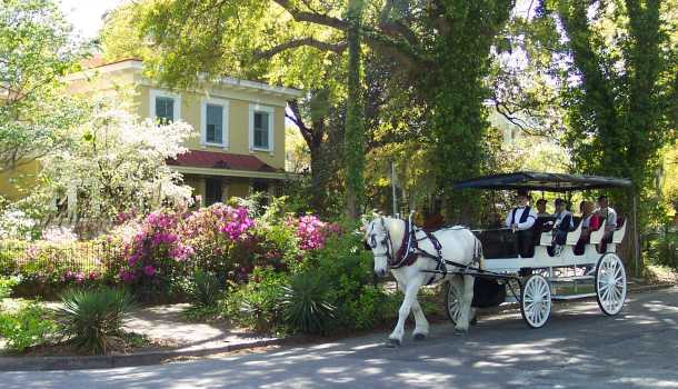 horse pulling carriage on Orange Street
