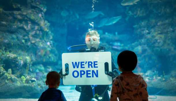 NC Aquarium of Fort Fisher We're Open Diver