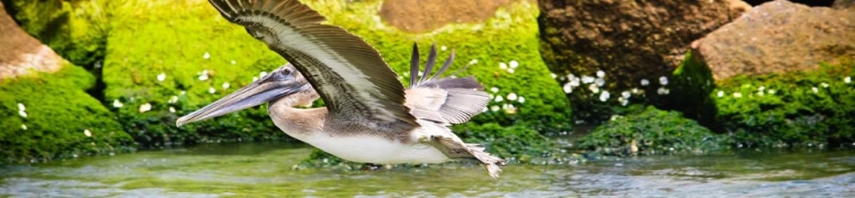 outdoor-recreation/creole-nature-trails/birding Bird