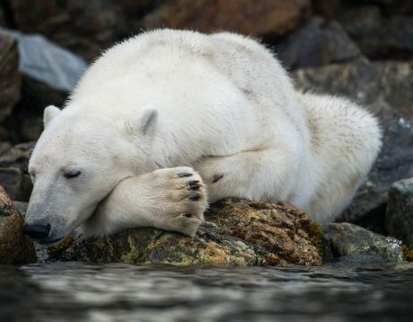 Svalbard Photography Expedition - Save  €500
