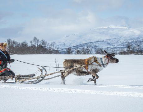 A Frozen-inspired Adventure
