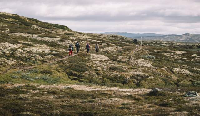 Four people travelling through Hardangervidda National Park