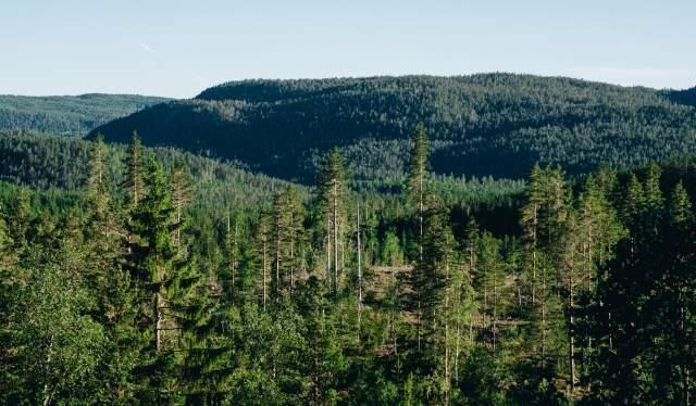 Forest in Gjerstad