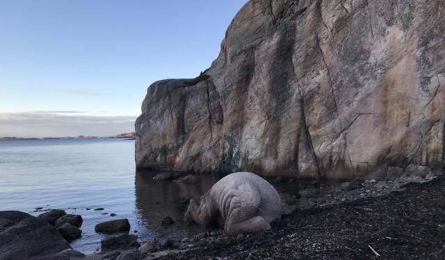 Sculpture Innadvendt strandning by Claus Ørntoft in bay Daudmannsbukta, Ny-Hellesund