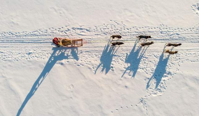 Dog sledding in Alta