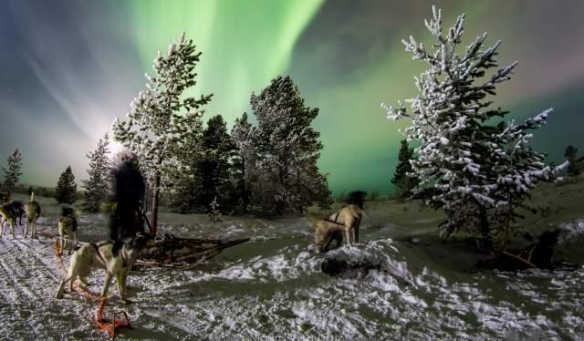 På jakt etter nordlyset med huskier