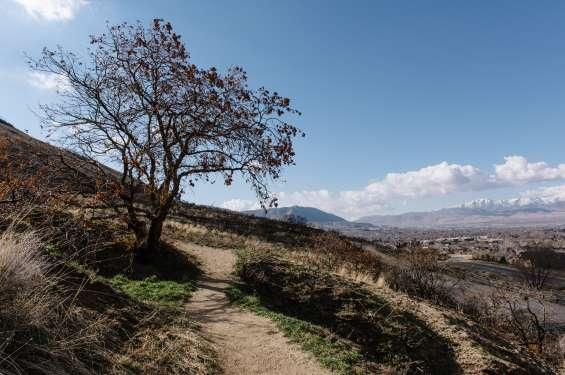 Mountain Trail Views in Draper