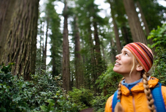 Patitucci Woman in Redwoods