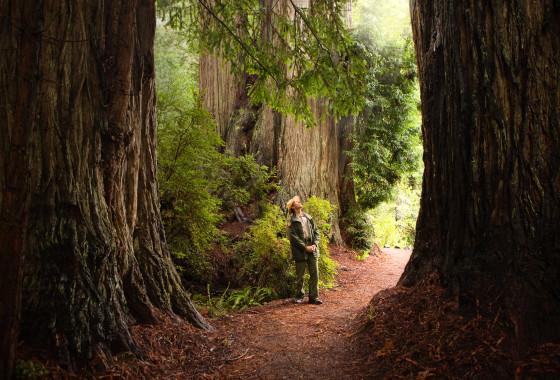 Ranger in the Redwoods
