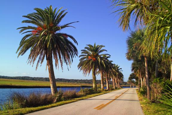 Experience Florida S Wild Side And Feel The Wind In Your Hair With A Ride Through Ormond Beach Scenic Loop This Picturesque Roadway Is Favorite Of
