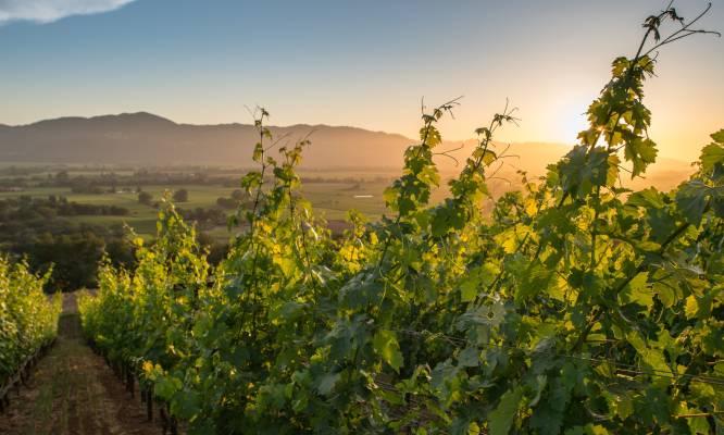 The Visit Napa Valley Blog