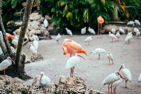 Blog Copy of Flamingo Gardens