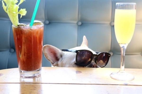 French bull dog wearing sunglasses at Shooters Waterfront with a bloody mary and mimosa