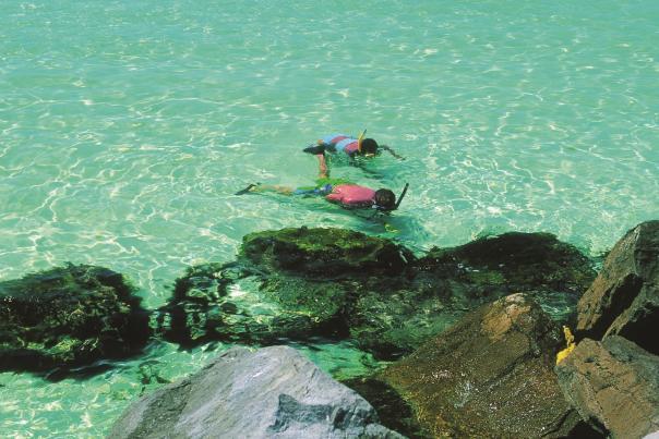 Snorkeling at Jetties