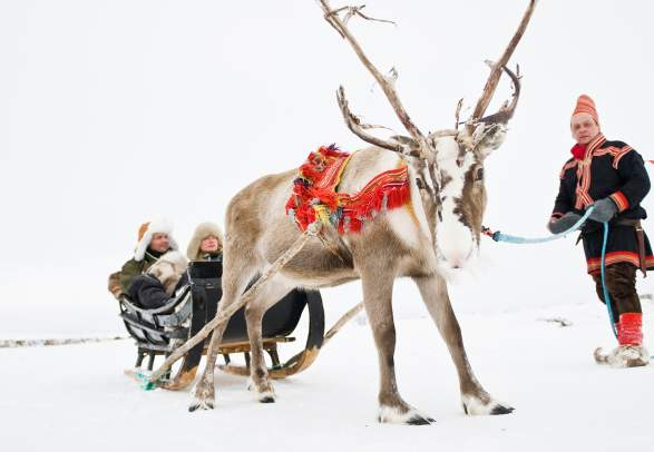 A couple in a sleigh pulled by a reindeer, held by a Sami man