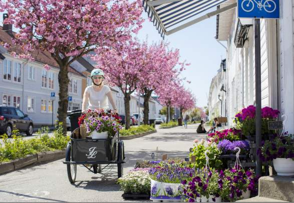 A woman cycling through Posebyen in Kristiansand on a transport bike full of flowers. Southern Norway.