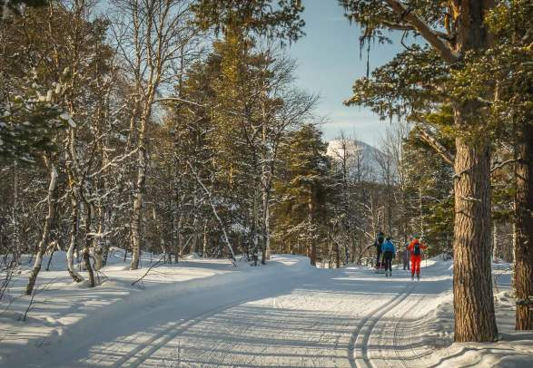 People cross-country skiing in the forest at Bjorli, Lesja, Eastern Norway