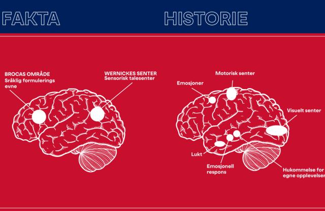 Flere deler av hjernen aktiveres av historier, enn av fakta.