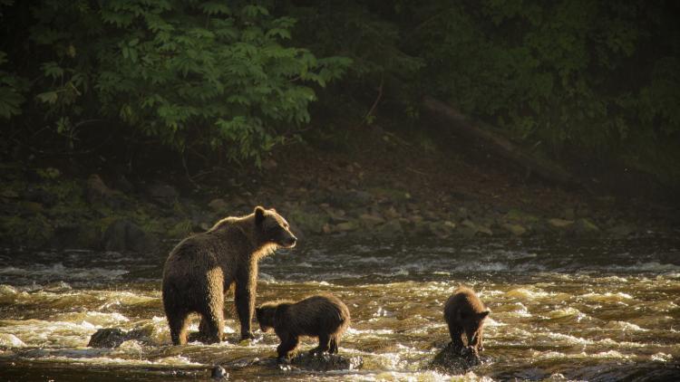 Bear and Family