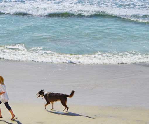 Pet Friendly Hotels In Huntington Beach Amenities And Fees