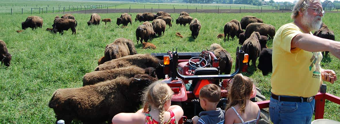 Broken-Wagon-Bison-Farm-Things-to-Do-South-Shore