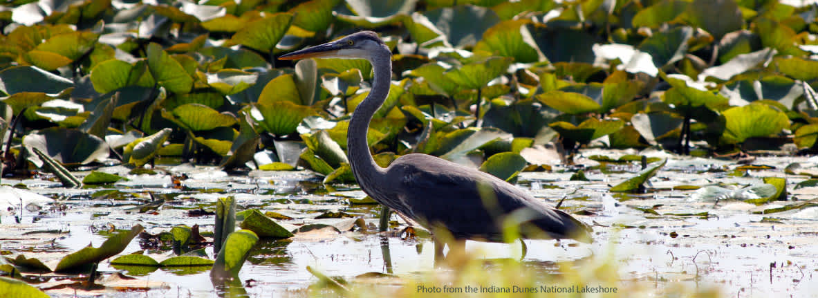 Long-Lake-Blue-Heron-Indiana-Dunes