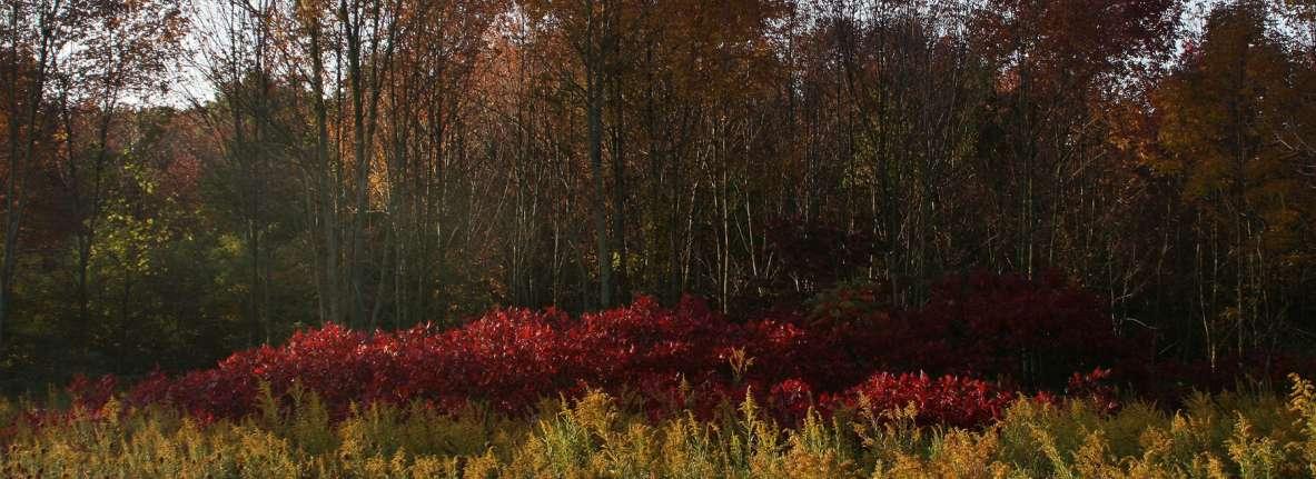 Pinhook-Bog-Fall-Indiana-Dunes-National-Lakeshore