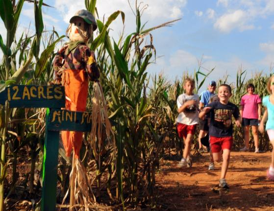 Copy of McKee's Corn Maze