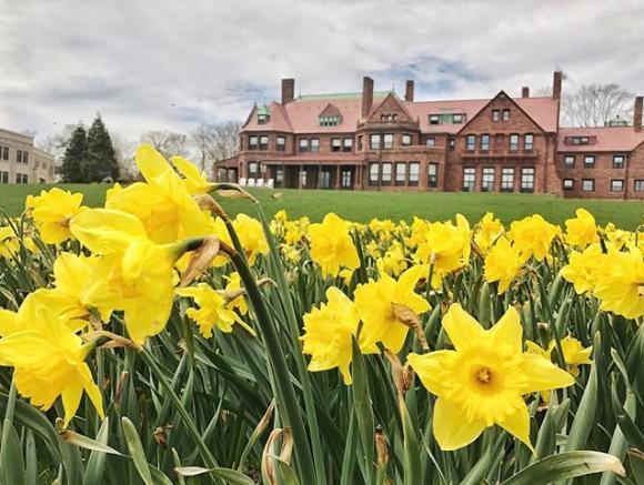Daffodil Days Discover Newport Rhode Island