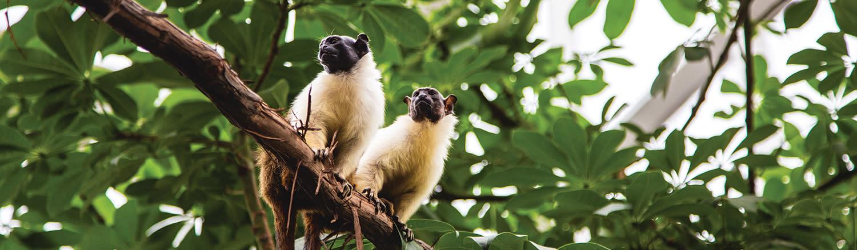 Roger Williams Park Zoo Rainforest