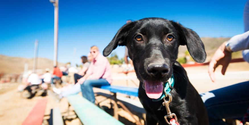 Live the Ruff Life in SLO CAL: Dog-Friendly Beaches, Parks and Hikes