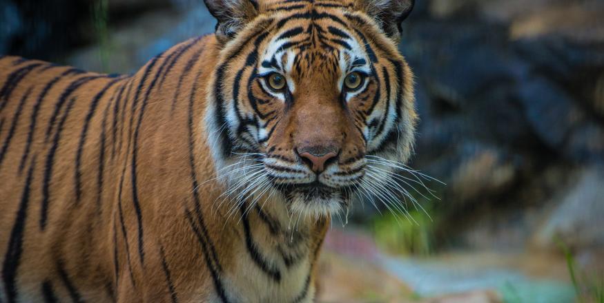 Charles Paddock Zoo