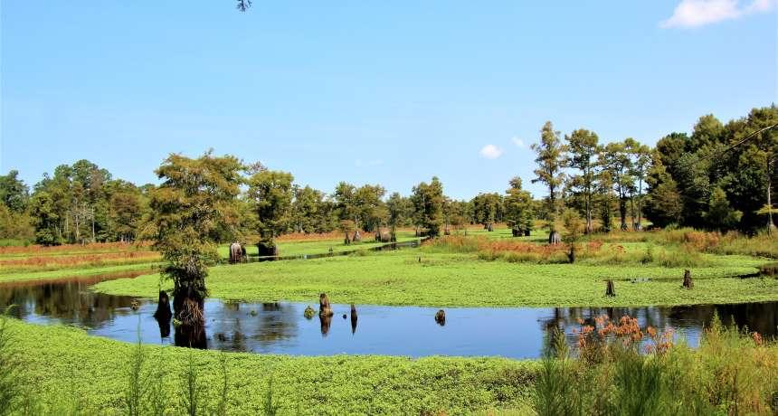 Godwin Rhodes Pond