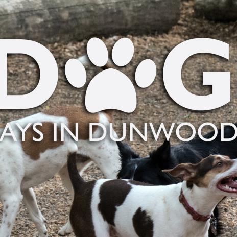 Dunwoody Dog Friendly Restaurants