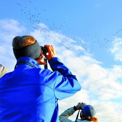 Copy of Birding