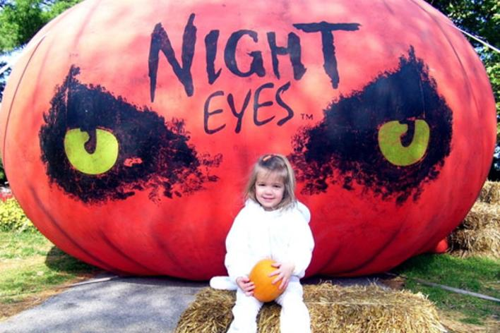 Halloween Blog Header night eyes